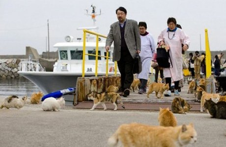 Жапониядағы аралдардың бірін мысықтар басып алды (фото)